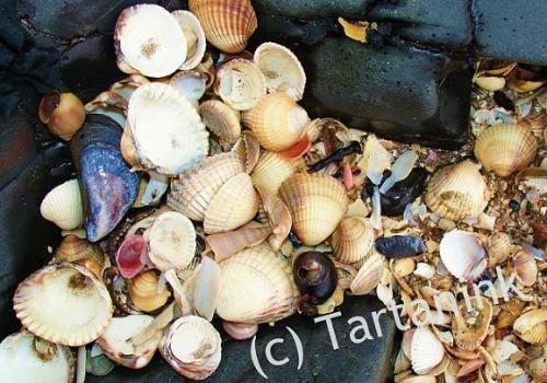 Shell Selection