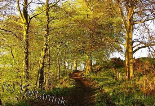 Nunholm Trees